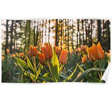 Tulips Garden Spring Fine Art Photography 0009 Poster