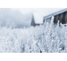 Snowy Plant Field Nature Fine Art Photography 0014 Photographic Print