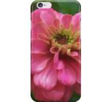 Pink Zinnia Painting iPhone Case/Skin