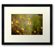 Coreopsis - Florida State Wildflower Framed Print