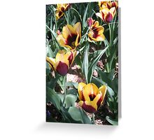 Tulip Time in Australia 14 Photograph  Greeting Card