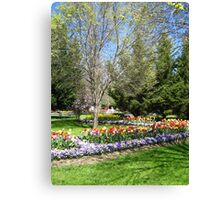 Tulip Time in Australia 11 Photograph  Canvas Print