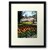 Tulip Time in Australia 9 Photograph  Framed Print
