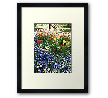 Tulip Time in Australia 3 Photograph by Heather Holland Framed Print