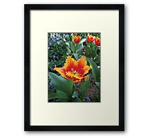 Tulip Time in Australia 2 Photograph by Heather Holland Framed Print