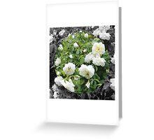 Rosa V Greeting Card