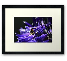 The Hard Working Bumble Bee Framed Print