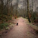 THE FOREST PATH ON YOU GO GUYS by leonie7