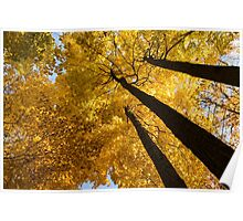 Golden Canopy - Three Trees Horizontal Poster