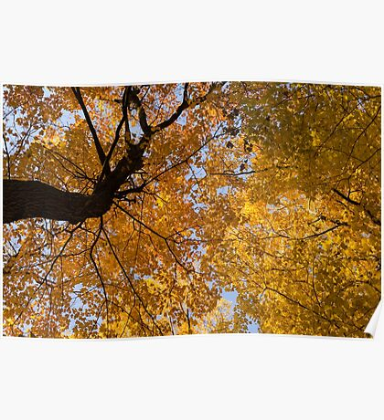 Golden Canopy - Twisted Tree Trunk Horizontal Poster