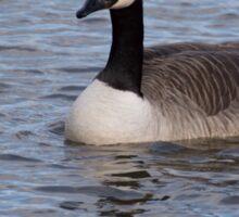 Canada Goose Sticker
