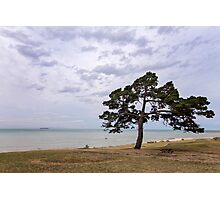 Fairy Dell, Clifton Springs Photographic Print
