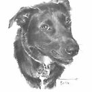 black dog drawing by Mike Theuer
