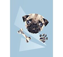 Cute Pug Photographic Print