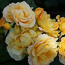 Yellow Rose of Southland by © Loree McComb