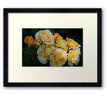 Yellow Rose of Southland Framed Print