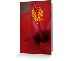 Hibiscus Detail Greeting Card