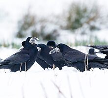 Meet the Corvids by M.S. Photography/Art
