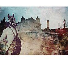 Mr Zebra Photographic Print