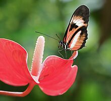 Butterfly and Flower by William C. Gladish