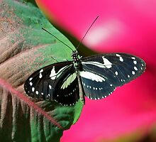 Butterfly and Colorful Leaf by William C. Gladish