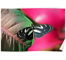 Butterfly and Colorful Leaf Poster