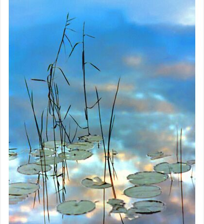 """""""Reflection - Reeds and Pond Lilies"""" Sticker"""