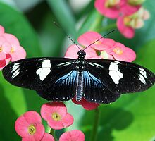 Butterfly and Flowers by William C. Gladish