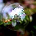 One Bubble, One Photographer by Laura Puglia