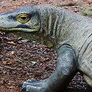 Komodo Dragon by Laurie Puglia