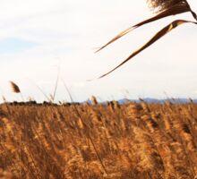 Wheat field- Campo de trigo Sticker