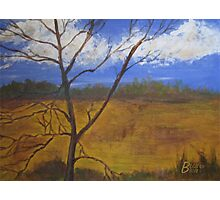 Early Spring Tree Photographic Print