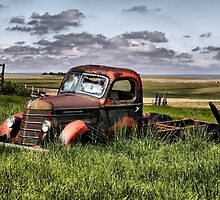 Old and Still Beautiful by Vickie Emms
