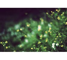 The softness of spring Photographic Print