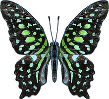 Deco Butterfly Tailed Jay by Garaga