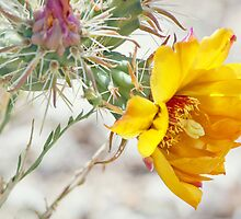 Yellow Desert Flower by Diana Graves Photography