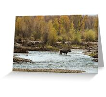 Moose in Mid-Stream Greeting Card