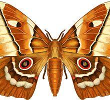 Saturna Moth Butterfly by Garaga