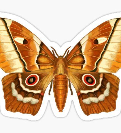 Saturna Moth Butterfly Sticker