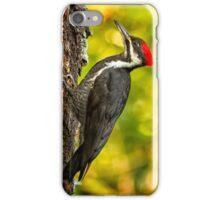 Female Pileated Woodpecker No. 2 iPhone Case/Skin