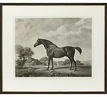 George Stubbs,  Engraving Sweetbriar horse Photographic Print