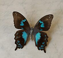 Butterfly by DonatellaLoi