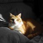 Mr Ginger Cat by Silvia Neto