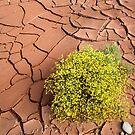 Survivor in the Desert by SeeOneSoul