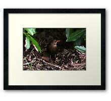 Hiding in the undergrowth Framed Print