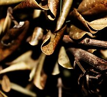 Dried Magnolia by moulderart
