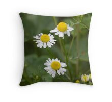 daisies in the meadow Throw Pillow