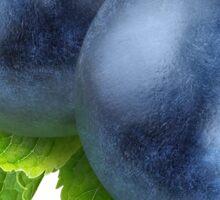 Two blueberries Sticker