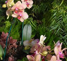 Orchids at The Phipps Conservatory Pittsburgh by Imagery