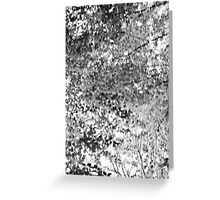 Trees in Forest Greeting Card